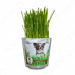 Трава для собак Happy Plant hp-42